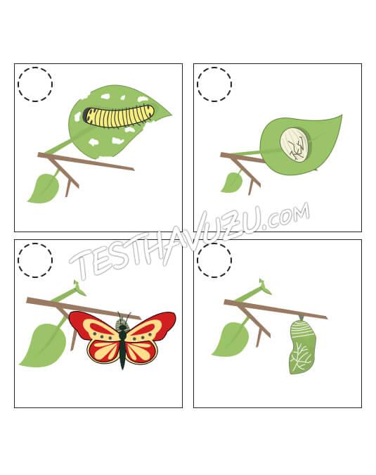 Olay Sıralama - Tırtıldan Kelebeğe