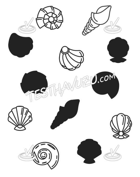 Eşleştirme - Deniz Kabukları